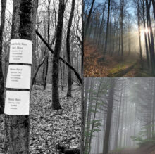6.Collage_Wald